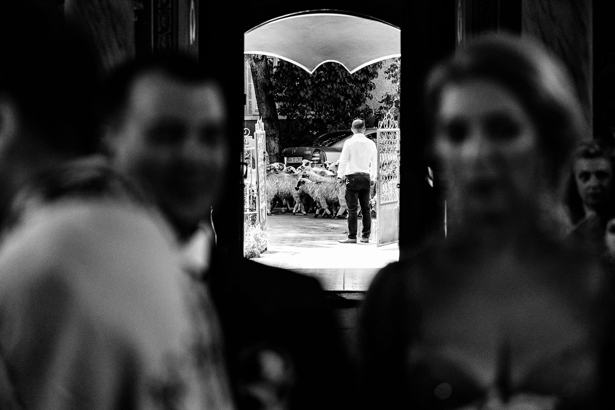12 Anca si Septi – Nunta la Castel Haller